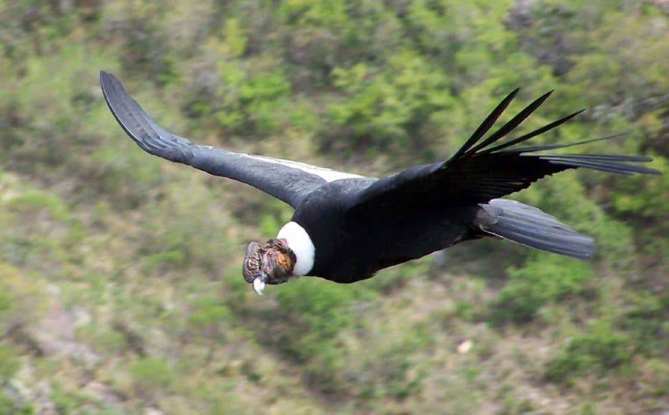ave nacional de colombia 4
